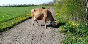 tierhaltung_referenzprojekte_rinderweg_NL2